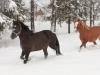 kajar-lember-eesti-hobused